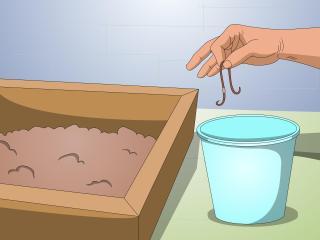 Make-a-Worm-Farm-Step-8-Version-2
