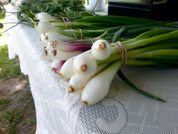 WithrowMarket-June21/Onions