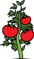 1245694766439408861johnny_automatic_tomato_plant.svg.hi