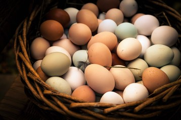 Photo By: Laura Bernman Beautiful Heritage Eggs: Green, blue, brown and white eggs in one basket.